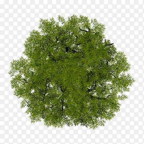 Illustration of tree top view for landscape on transparent PNG