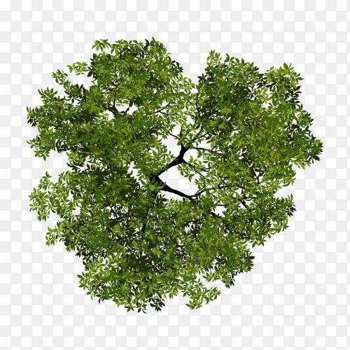 Illustration of tree top view for landscape on transparent background PNG