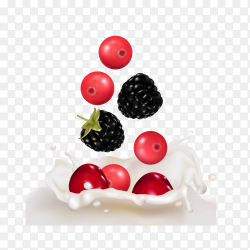 Raspberries and cherry in splashes of yogurt or milk on transparent background PNG