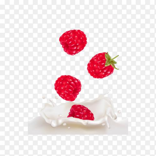 Raspberries in splashes of yogurt or milk on transparent background PNG