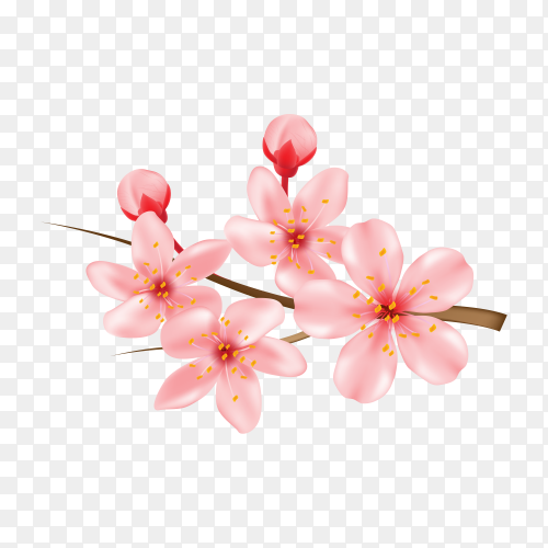 Realistic 3d cherry blossom isolated on transparent background PNG