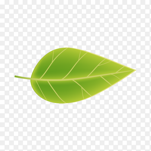 Realistic Green leaf isolated on transparent background PNG