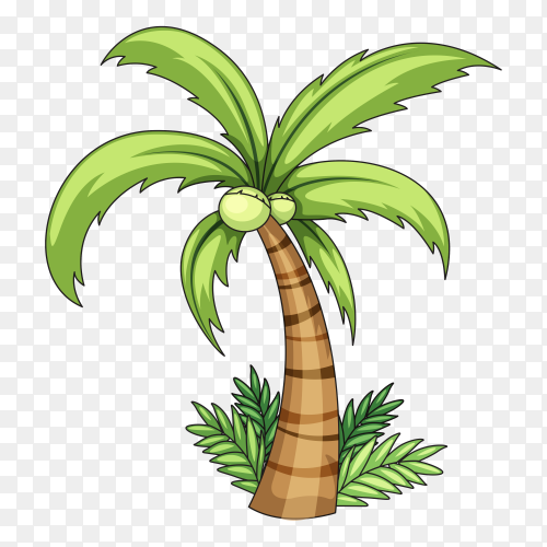 Realistic palm tree illustration on transparent background PNG