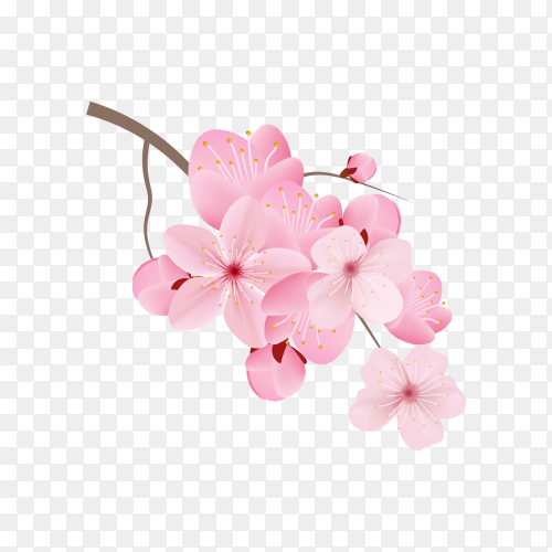 Realistic sakura branch tree mock up on transparent PNG