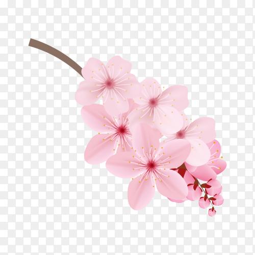Realistic sakura branch tree mock up on transparent background PNG