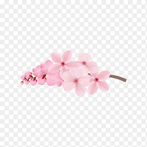 Realistic sakura branch tree on transparent background PNG