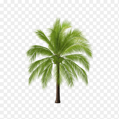 Realistic tree isolated Clipart PNG
