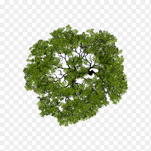 Tree top view for landscape illustration on transparent background PNG