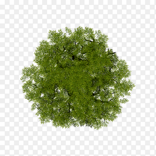 Tree top view for landscape isolated on transparent background PNG