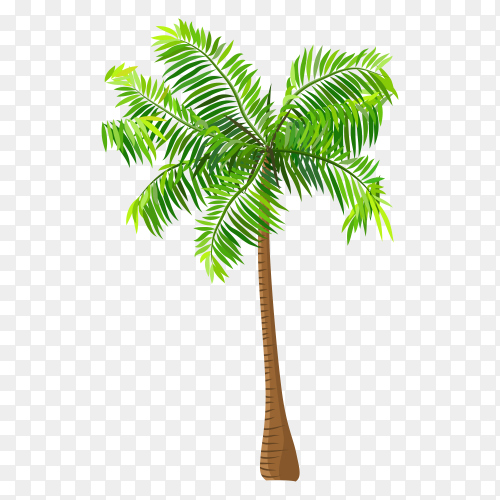 Tropical coconut palm tree illustration on transparent background PNG