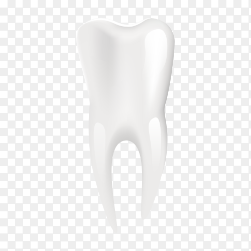 Clean human tooth on transparent background PNG