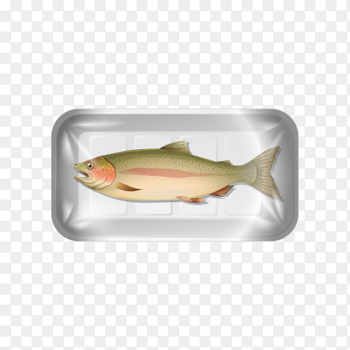 Fish on transparent background PNG