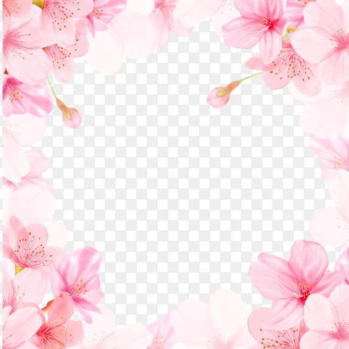 Watercolor floral cherry blossom frame on transparent background PNG