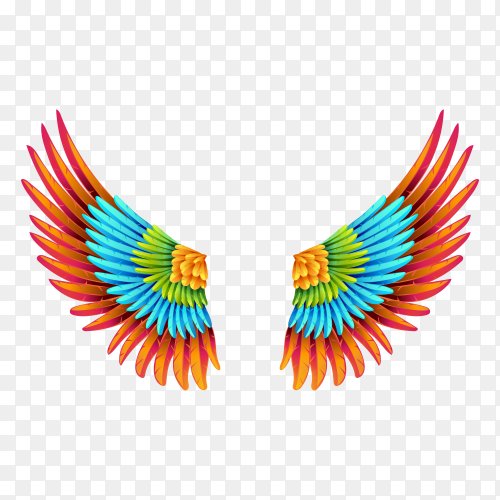 Colorful wing isolated on transparent background PNG