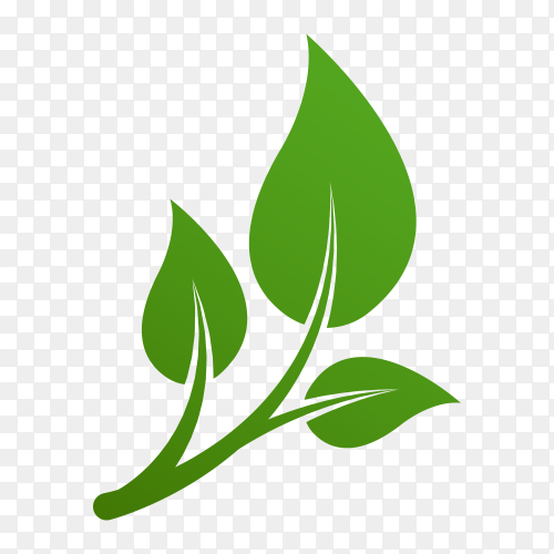Green leaves logo. plant nature Eco garden stylized icon on transparent background PNG