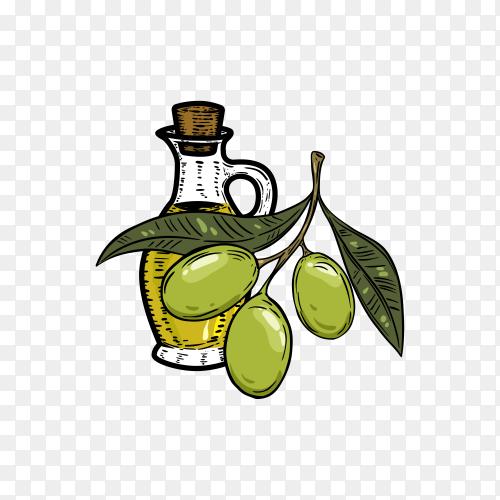 Olive oil logo design on transparent background PNG