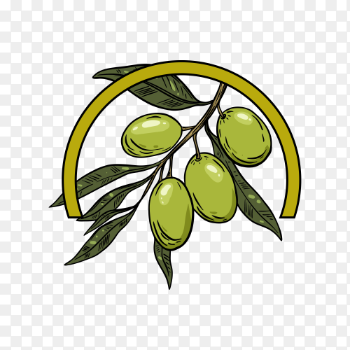 Olive oil logo isolated template on transparent background PNG