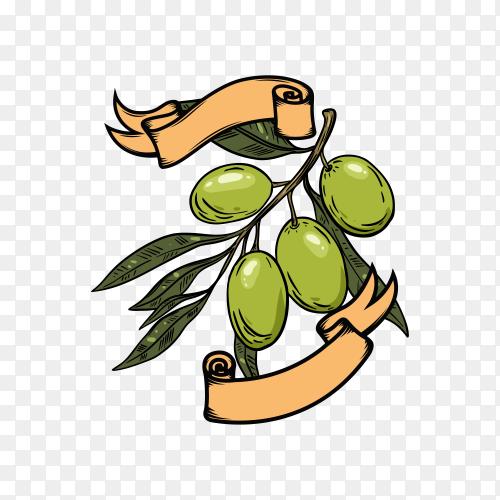 Olive oil logo on transparent background PNG