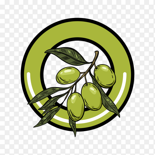 Olive oil logo template on transparent background PNG