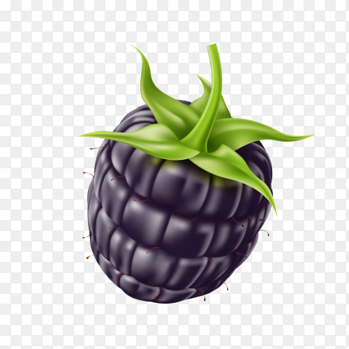 Realistic fresh blackberry on transparent background PNG