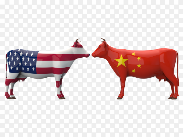 American cows verses chinese cows vector PNG