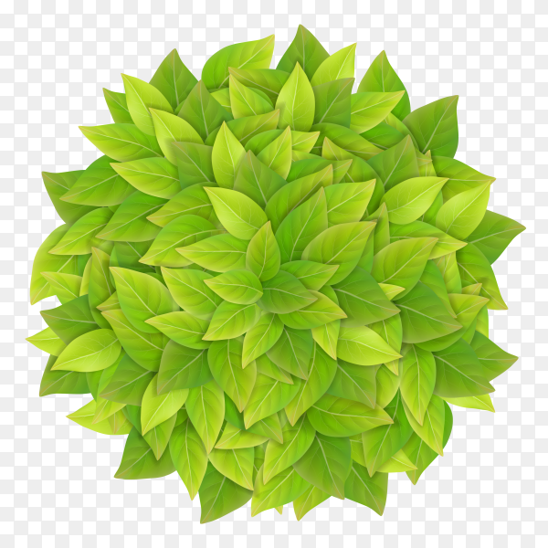 Ball green leaves realistic detailed vector PNG