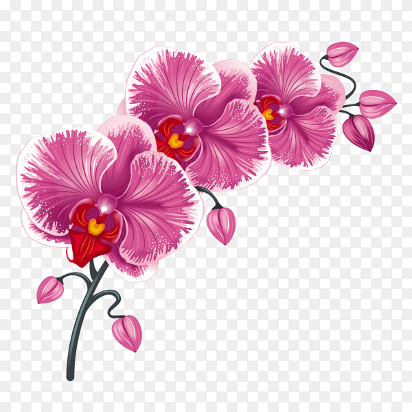 Beautiful Purple flowers on transparent background PNG