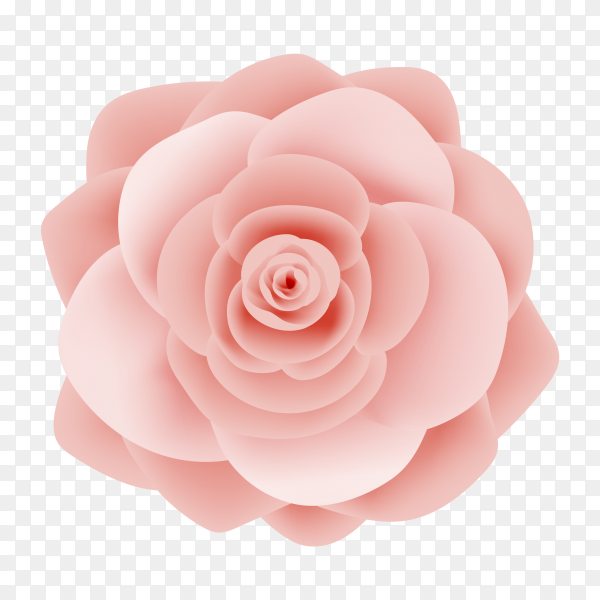 Beautiful pink rose on transparent PNG