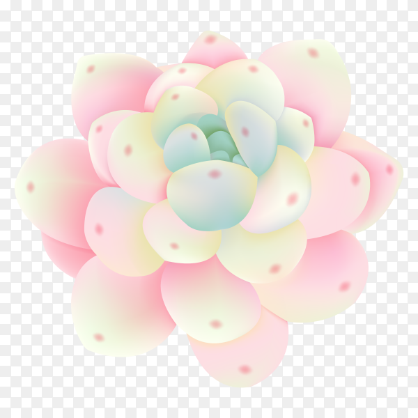 Beautiful succulents flower collection vector PNG