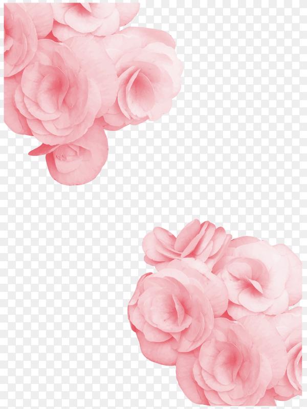 Beautiul pink rose Clipart PNG