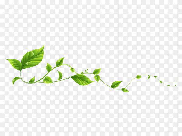 Branch leaves vector PNG