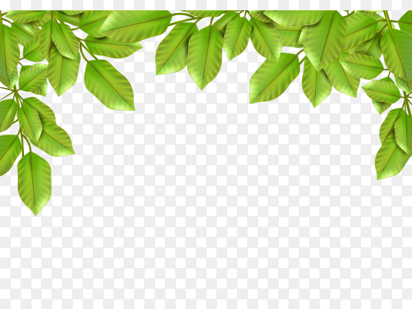 Deciduous tree leaves on transparent PNG