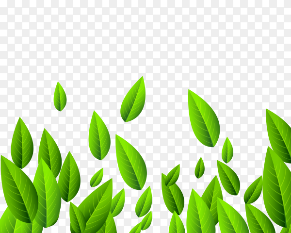 Falling green long leaves Clipart PNG