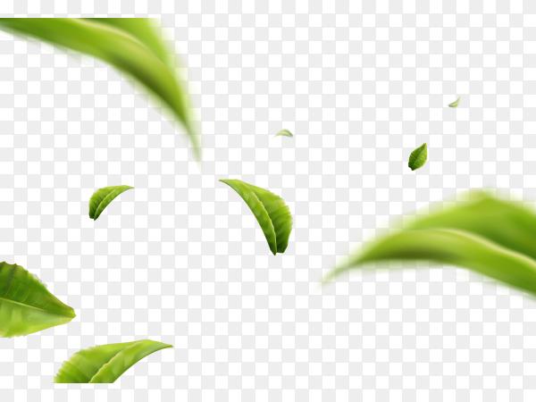 Flying green leaves in air vector PNG
