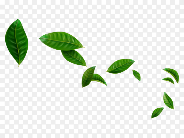 Flying green leaves vector PNG