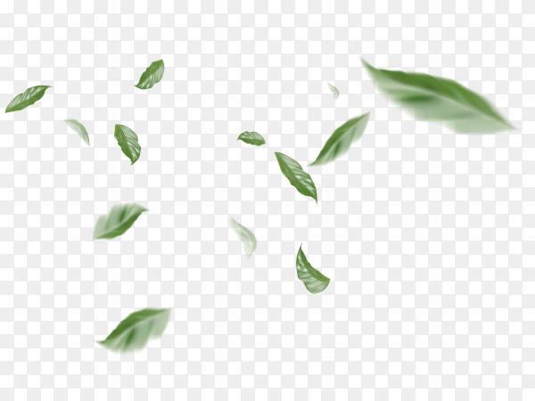 Flying leaves on transparent background PNG