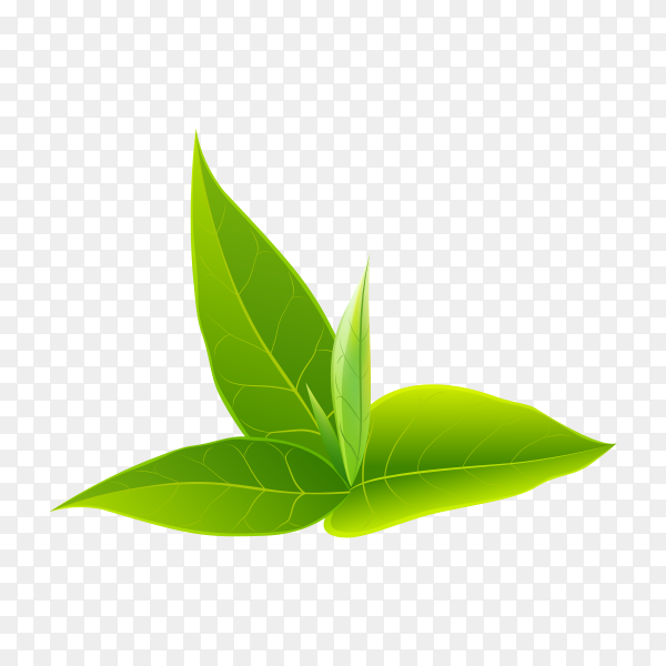 Green leaves clipart PNG