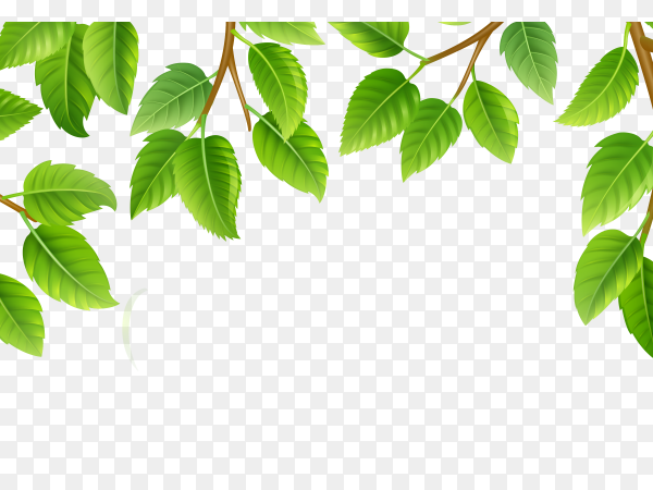 Green leaves nature background print vector PNG