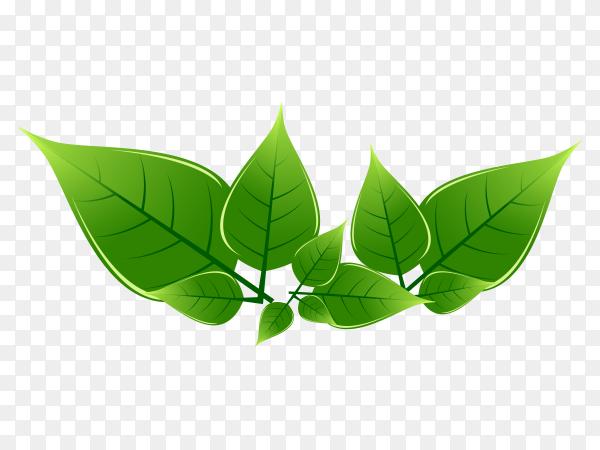 Green leaves premuim vector PNG