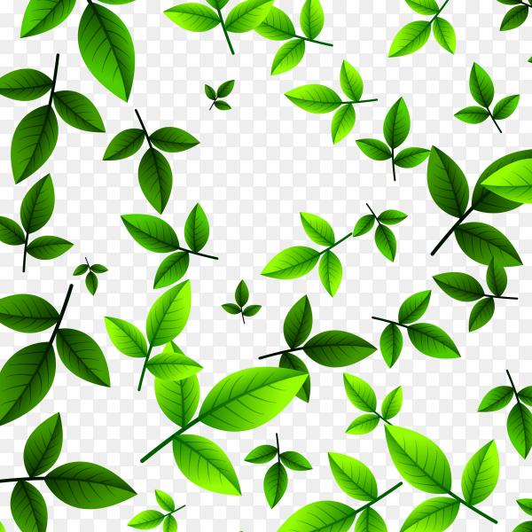 Leaves green tea on transparent PNG