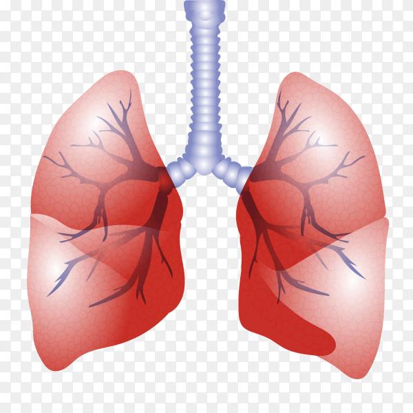 Heart And Lung Endurance Clipart - Lung - Free Transparent PNG Clipart  Images Download