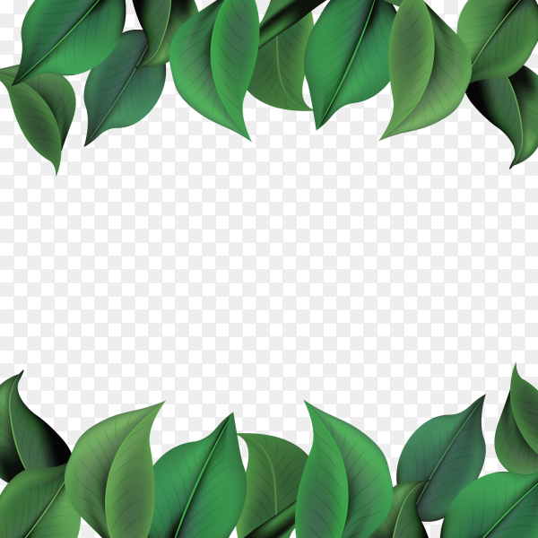 Natural background with green leaves vector PNG