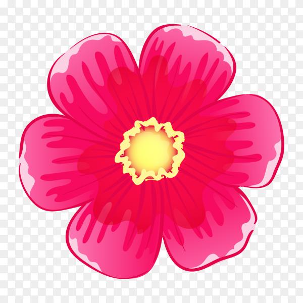 Pink flower on transparent PNG