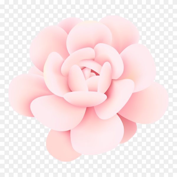 Pink roes on transparent PNG