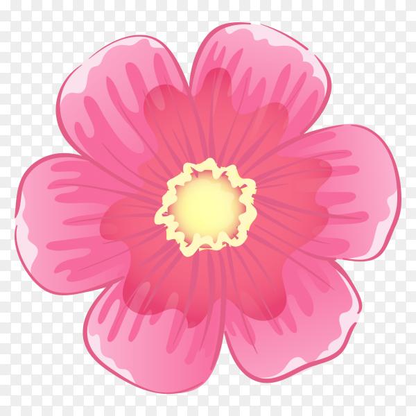 Pink rose on transparent background PNG