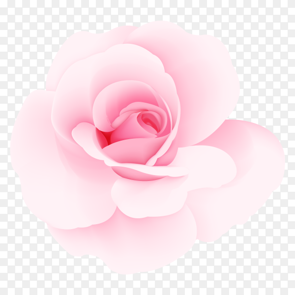 Pink roses vector PNG