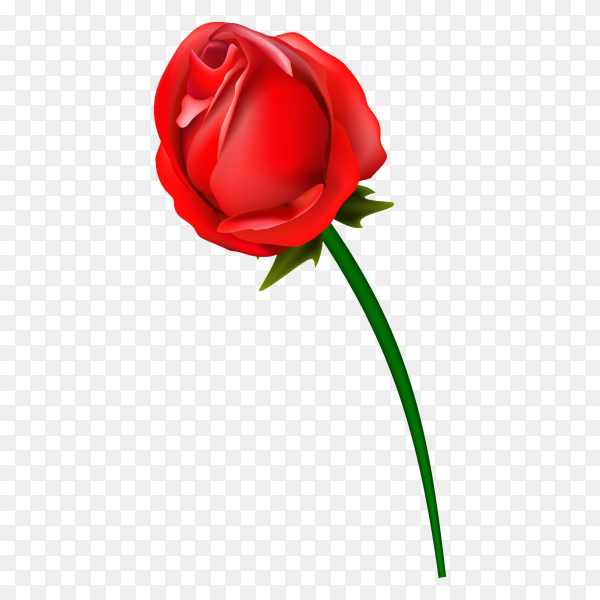 Red rose flower vector PNG
