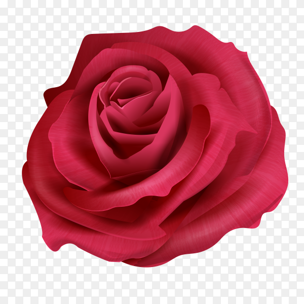 Red rose flowers on transparent background PNG
