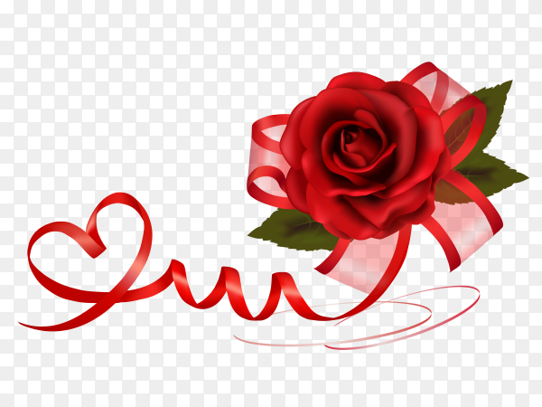 Red rose with ribbon on transparent PNG
