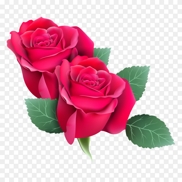 Red roses card on transparent PNG